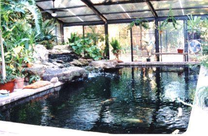 Indoor koi pond home pinterest for Indoor koi fish pond