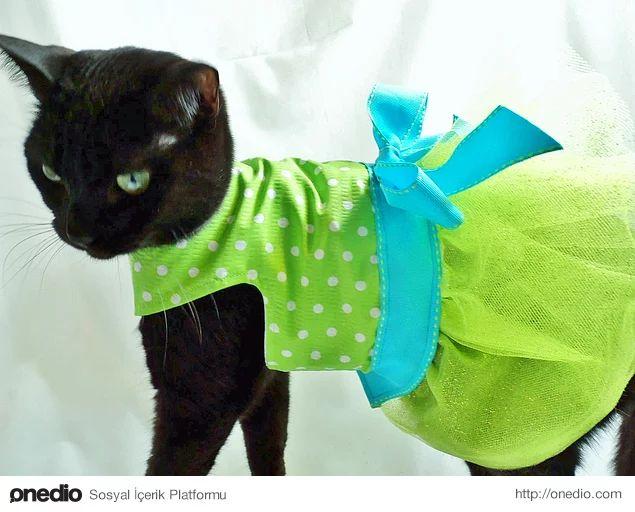 Быстро сшить костюм для кошки своими руками 871