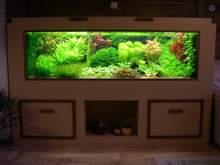 Another stunning Dutch aquascape Somethings fishy Pinterest