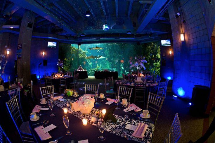 Tampa Aquarium Reception Space Aquariums Pinterest