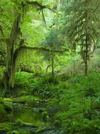 pacific northwest rainforest  Pacific Northwest