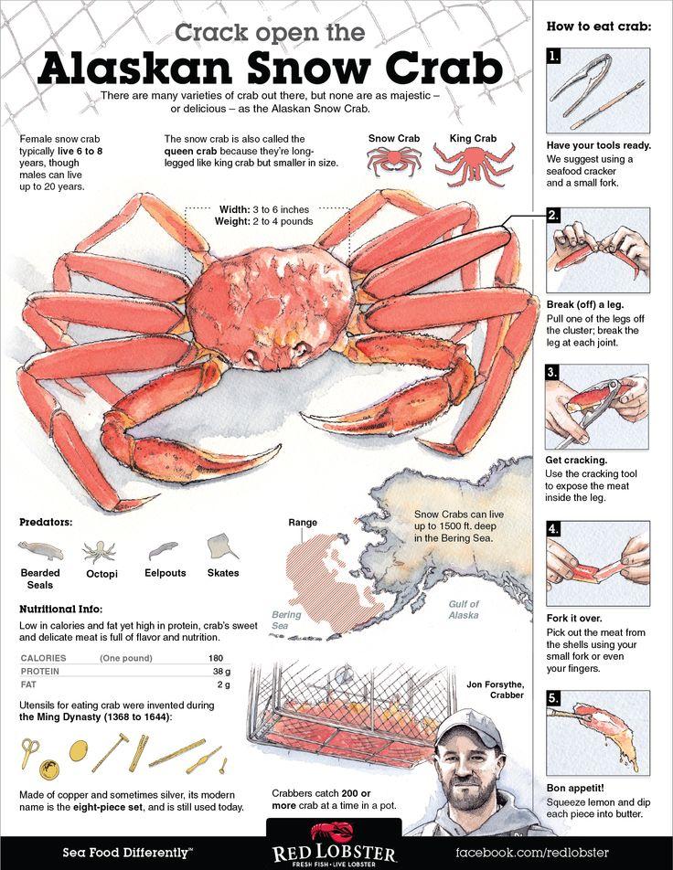 Crab Dynasty  Marylands Favorite Online Seafood Supplier