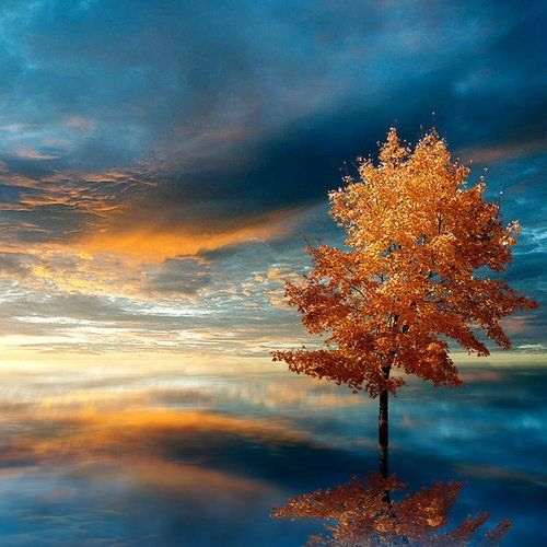Blue Autumn by *JacqChristiaan