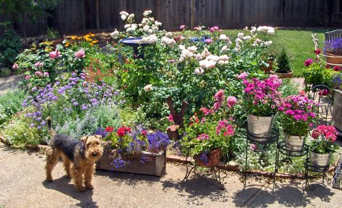 Dog Friendly Backyard Ground Cover : Dog friendly flowers off the ground  Gardening and outdoor  Pinter