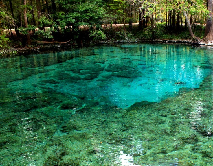 Ginnie springs high springs florida roots pinterest