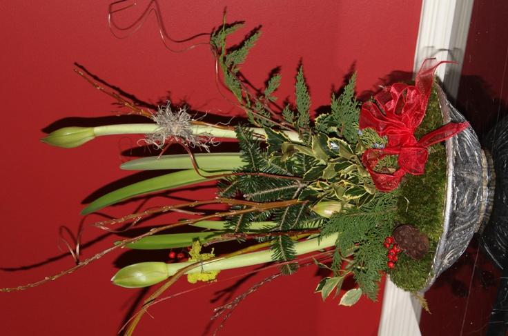 Christmas amaryllis gardening flowers letwig pinterest