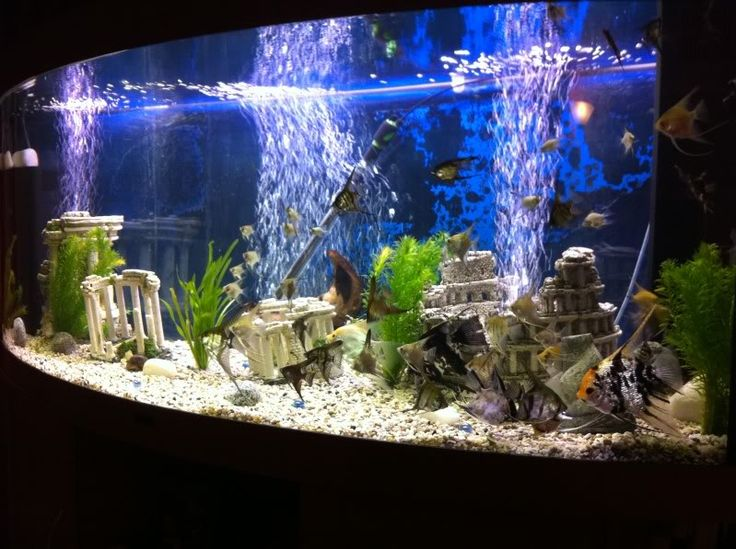 Pin by stefany hack on freshwater aquarium obsession for Freshwater fish tank