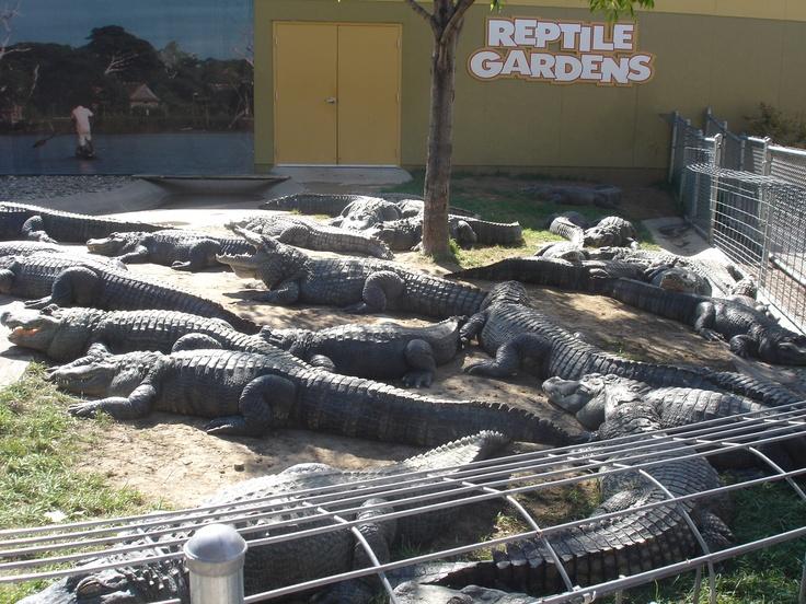 Reptile Gardens South Dakota Pinterest