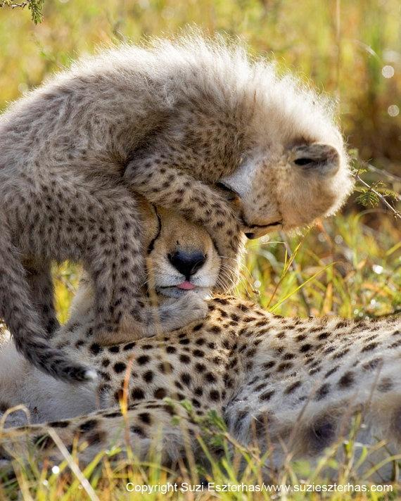 #Animal #Wildworld #Discovery