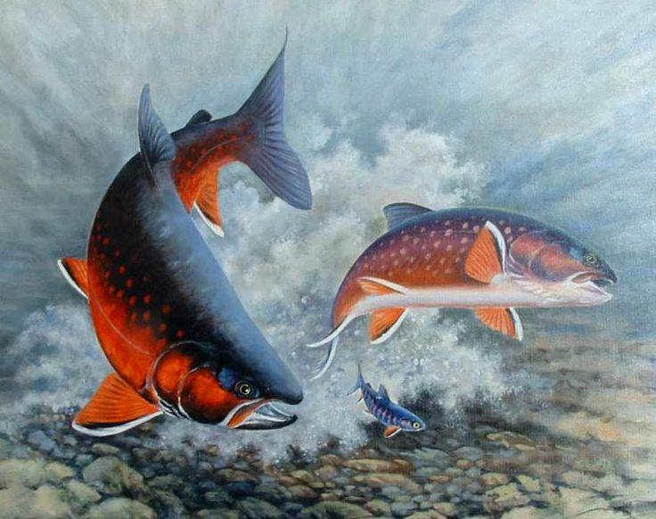 Arctic char fishing wish list pinterest for Arctic char fish