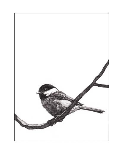 Pen and Ink Drawing Reproduction Black-capped Chickadee Note Cards       Black Capped Chickadee Drawing