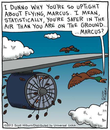 bird airplane, flying joke, airplane comic