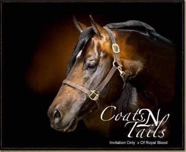 Coats N Tails. AQHA Stallion | Stallions | Pinterest