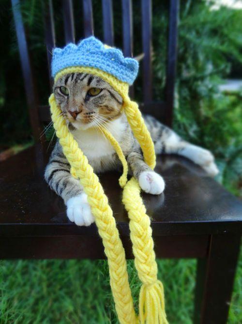 Gorros tejidos para perros y gatos - Ideales para el Invierno y Halloween
