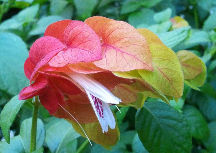 SHRIMP FLOWER FLOWERS! Pinterest