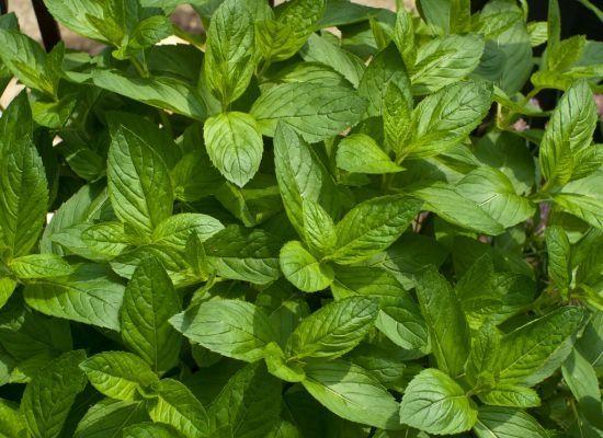 Mondays: 4 Mint Recipes. Moroccan mint roasted vegetables, vegan mint ...