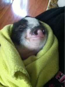awww :)....all snuggly! | Awwww | Pinterest
