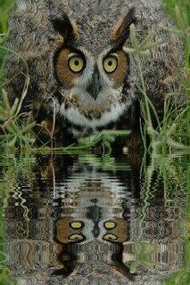Owl meditation