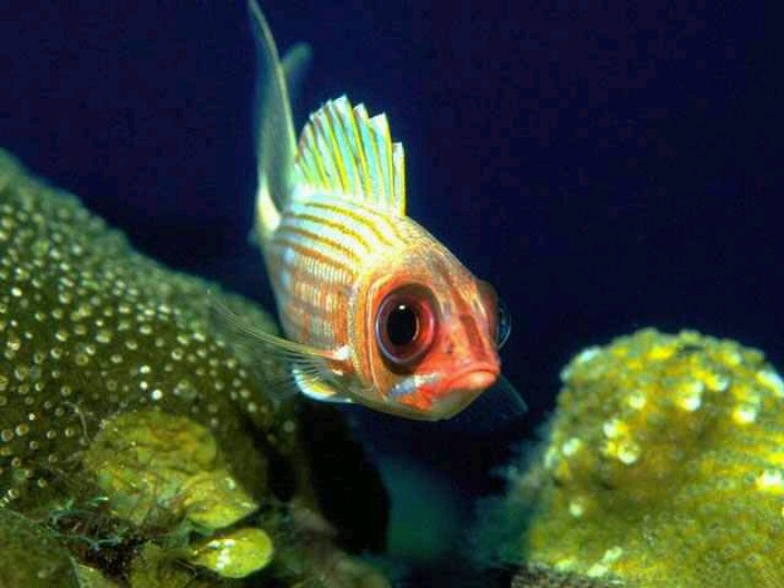 Exotic saltwater fish under the sea pinterest for Exotic saltwater fish