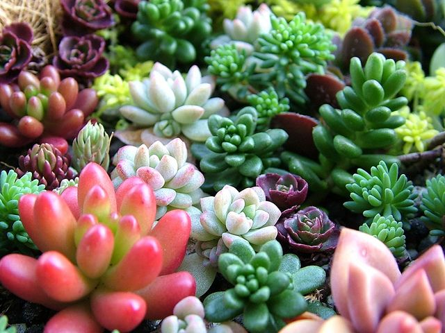 sedums…….most are moderate growing groundcovers.   Great for fill ins betwee