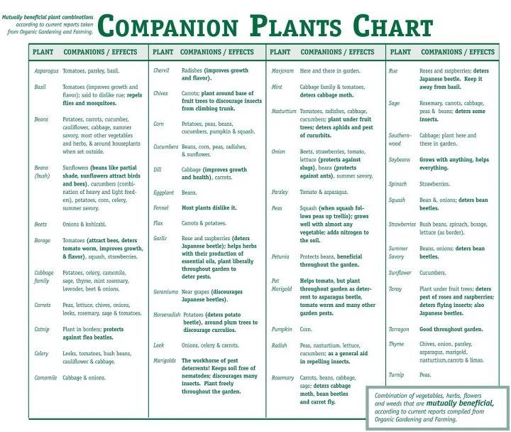 Companion Planting Chart Gardening Ideas Pinterest