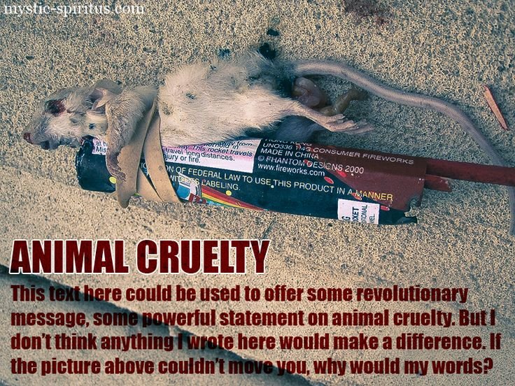 why is animal cruelty wrong essay The way i look at animal testing is a form hateful cruelty none of these people care about if it hurts or kills the animals the cruelty has been going on long enough and i think it is time to stop what people do not know is that animal's react a different way to drugs as humans do.
