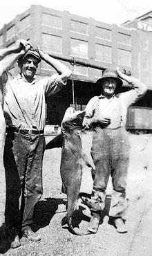 Bull shark caught in Alton, IL in 1937.