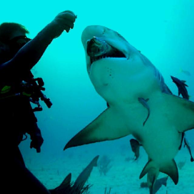 Marine Biologist Related Keywords - Marine Biologist Long ...