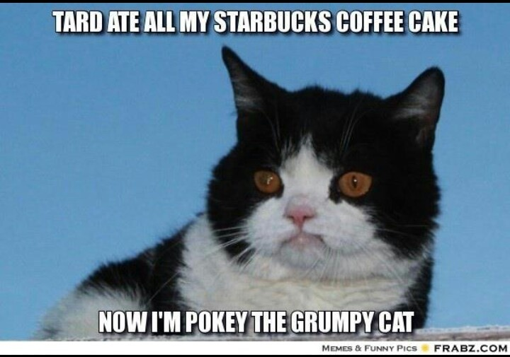 Grumpy Cat's brother | Animal Obsession | Pinterest