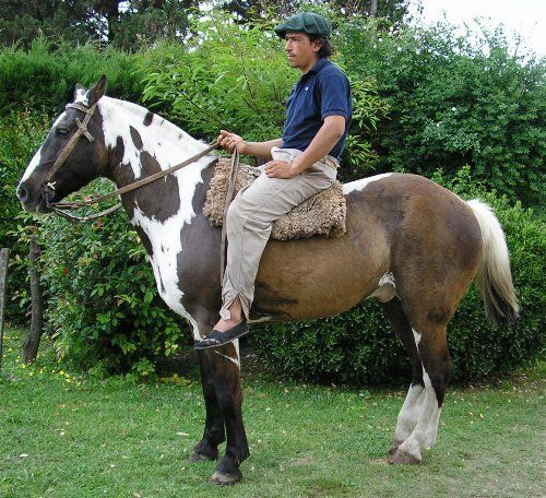 Somatic horse