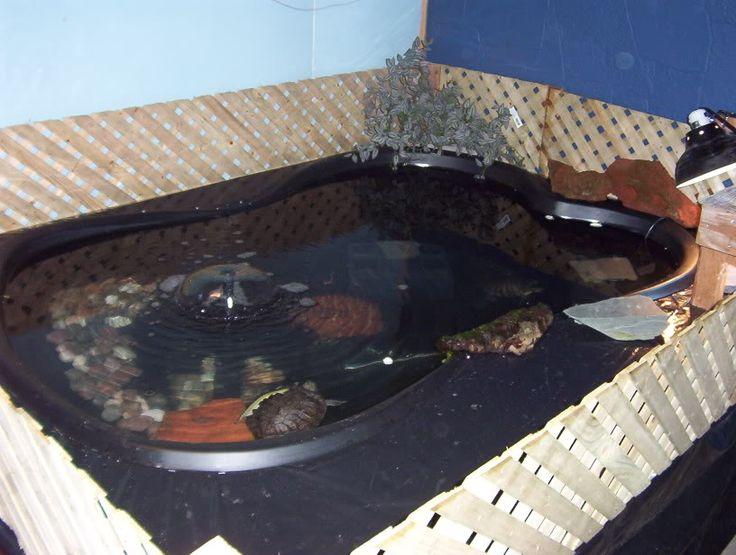 outdoor turtle habitat ideas tips on an outdoor turtle pond ...
