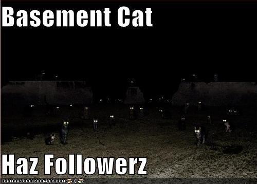 basement cat bad kittehs pinterest