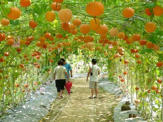 Square foot garden layout plans - Pumpkins Outside Pinterest