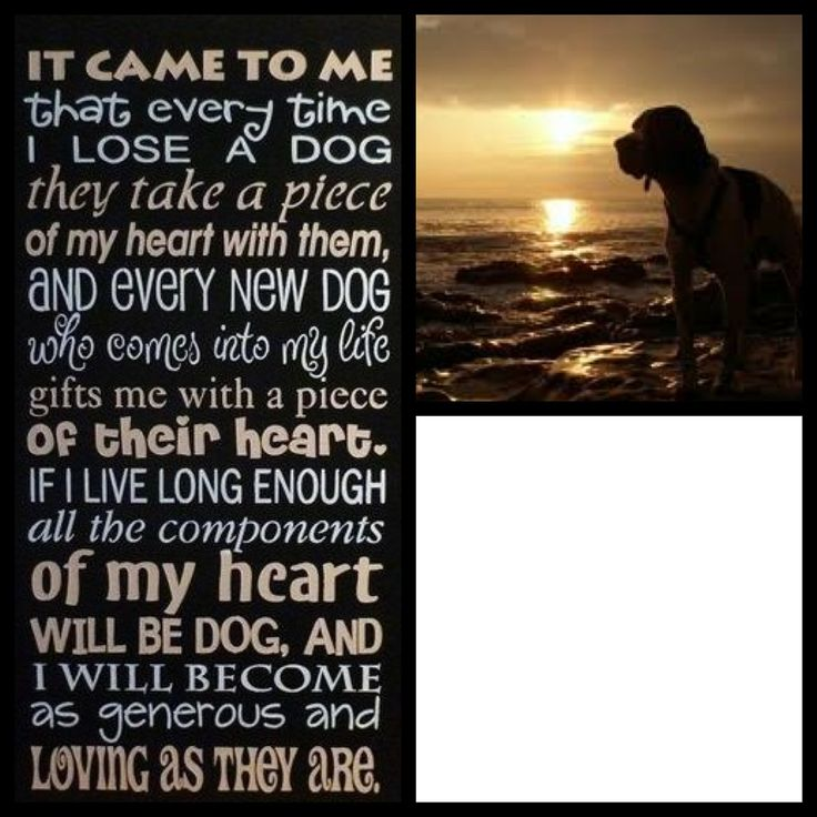 poems about love pet loss quotes inspirational quotes grief loss pet ...