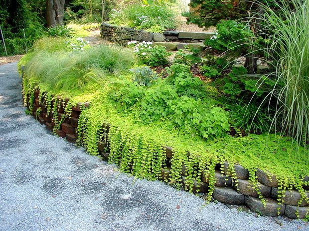 Pin By PennLivecom On Gardening In PA Pinterest