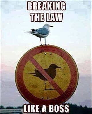 Breaking the law like a boss!!