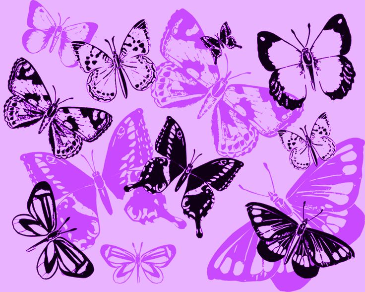 Purple Butterfly Lupus | www.imgkid.com - The Image Kid ...