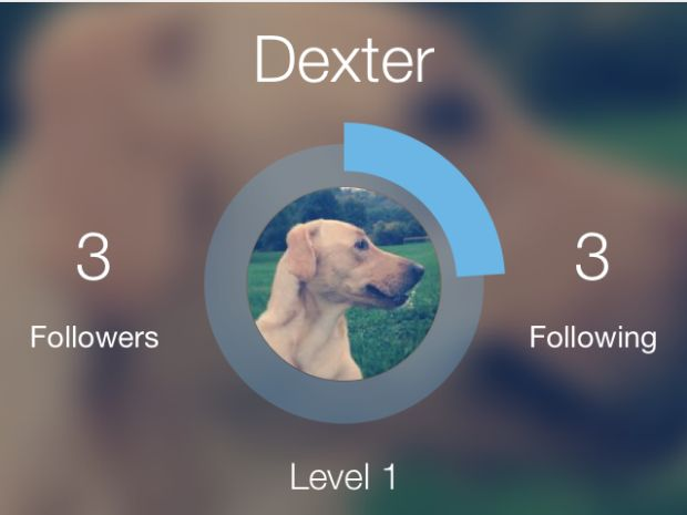 social networking goes dogs