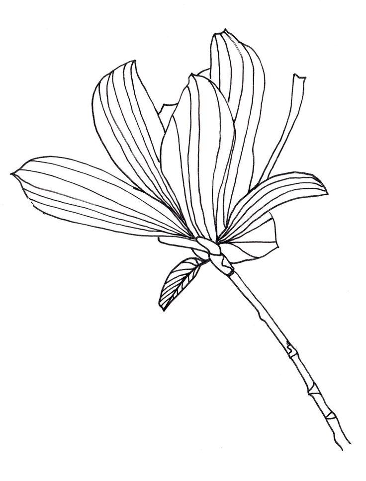 Line Drawing Of Tulip Flower : Line drawing flowers tulip tree bloom drawings