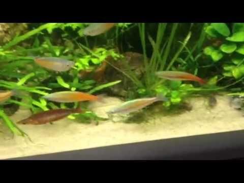 Freshwater Aquarium Fish 8 8 Freshwater Community