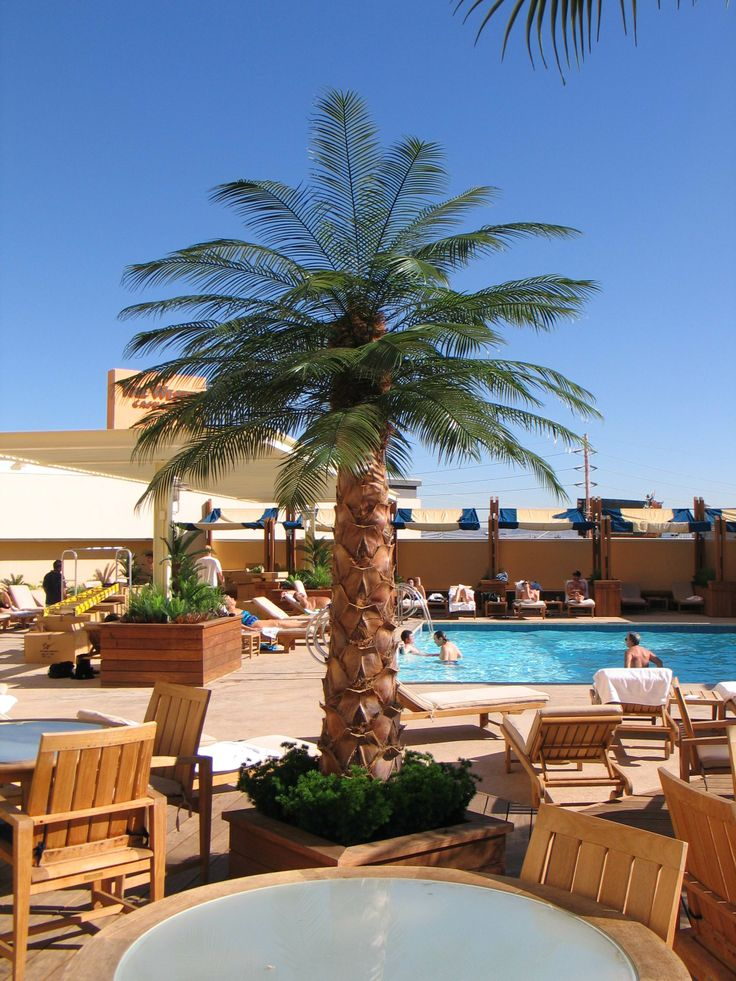 Outdoor Palm Las Vegas Viva Las Vegas Pinterest