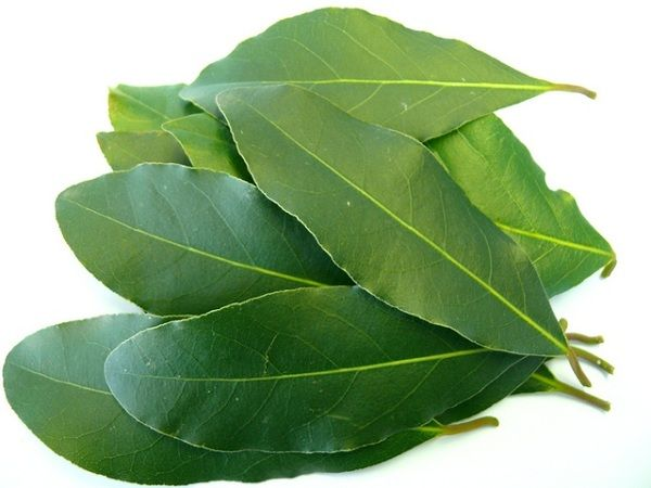 Bay leaves vegetable herb spice fruits nuts cook pinterest - Cook bay leaves ...