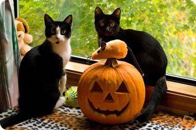 fotos de gatos dsfrazados de haloween - Buscar con Google