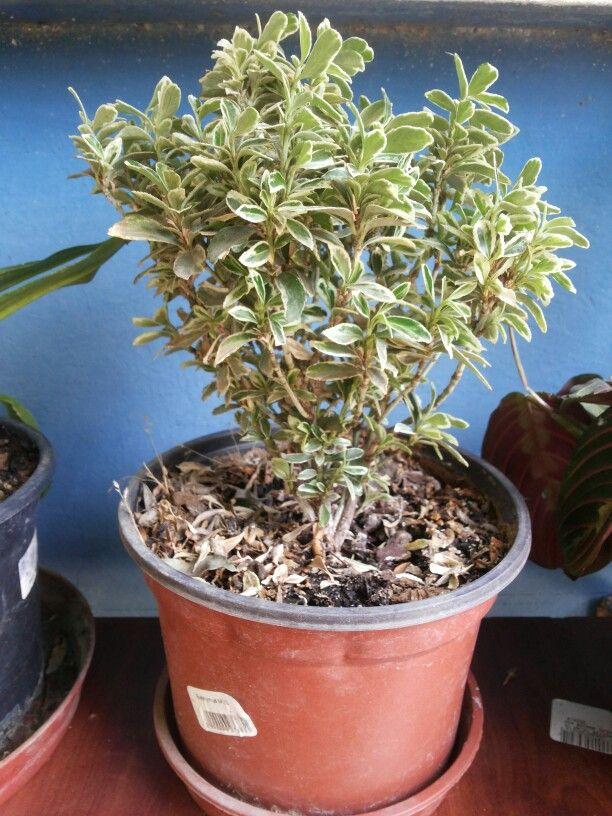 Pin by paula v loyola on mis plantas pinterest - Plantas resistentes al sol ...