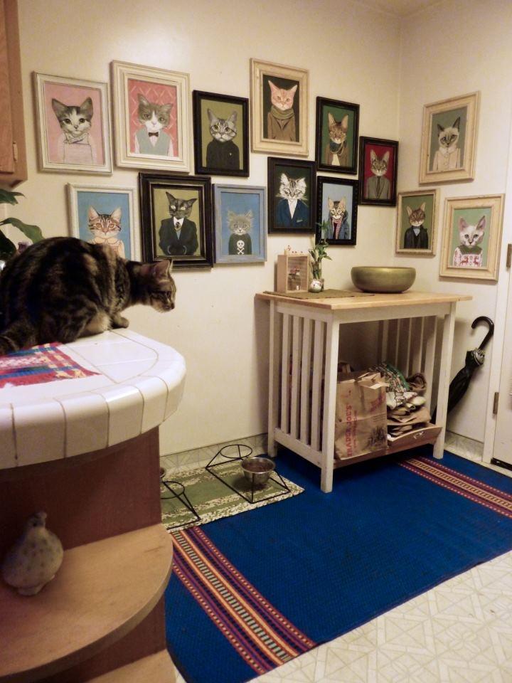 retratos de gatos