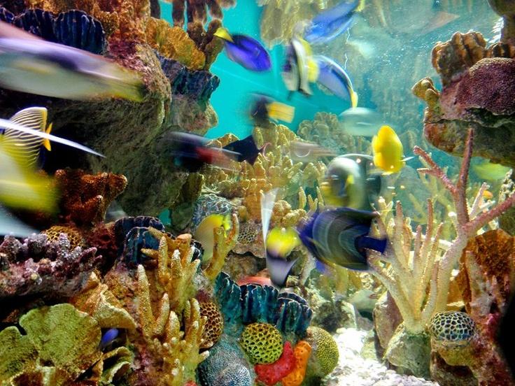 Boston Aquarium Places I Love Pinterest