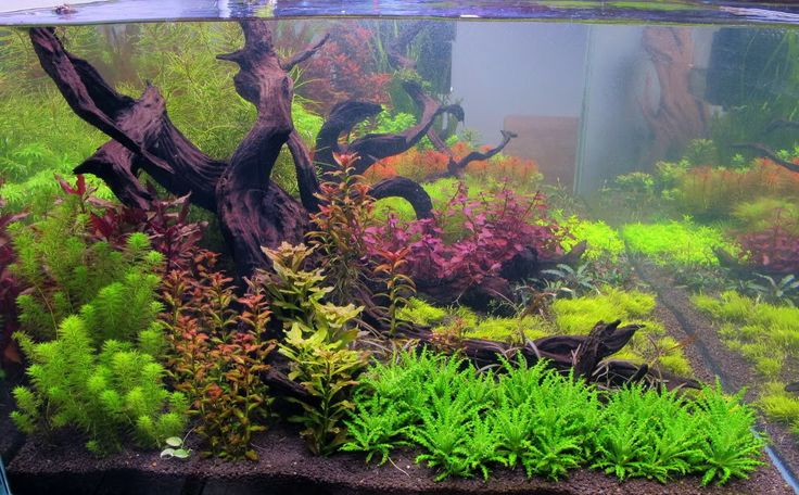 ... gallon Dutch Planted something or another - Page 32 - Aquarium Plants