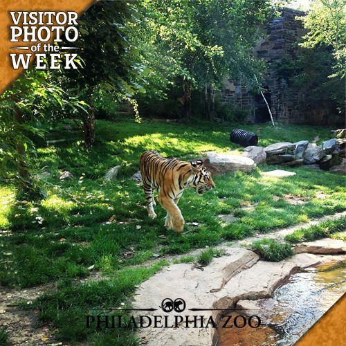 philadelphia zoo july 4th