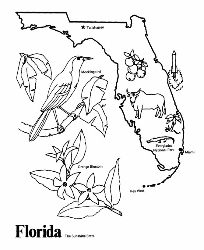 Florida state outline coloring page happiest place on for Florida state coloring pages