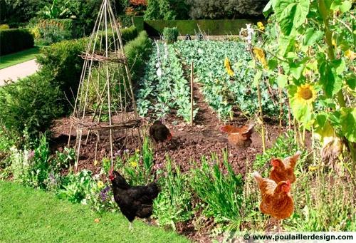 Adopter une poule dans son jardin little gardening ideas for Avoir une poule dans son jardin